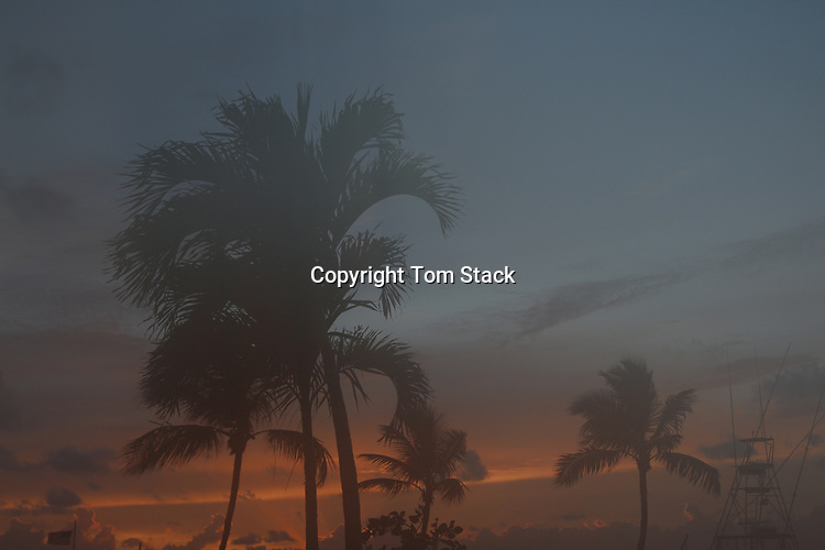 Tropical palm trees silhouetted at dusk
