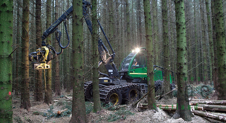 Forestry cutting trees in the a forest with a John Deere harvester near Ae village, Dumfries and Galloway, Scotland, UK