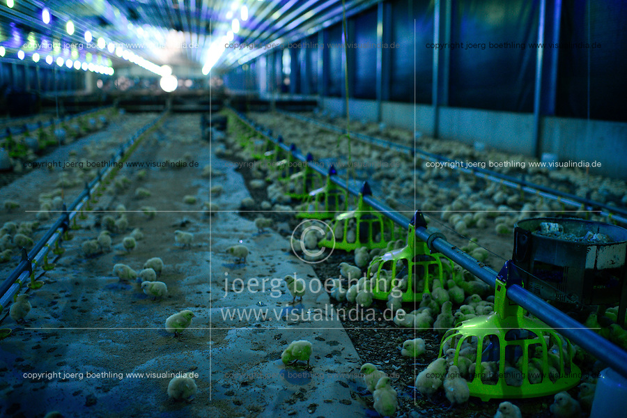 NIGERIA, Oyo State, Ibadan, Sayed farm a industrial chicken farm by lebanese investors, annual production of 1.6 billion broiler with the barnd name Fiesta for supermarkets like shoprite, a special lightening is used to control the day cycles of the chicks for optimum and fast growth / industrieller Huehnermastbetrieb Sayed Farm von libanesischen Investoren, Produktion von 1,6 Mio Broilern pro Jahr, Aufzucht von Brathaehnchen, Broiler der Marke Fiesta fuer Verkauf an Supermaerkte wie shoprite