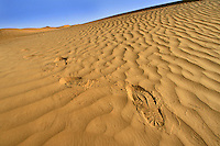 Footprints in the Taklamakan desert in Xinjiang province, China, on October 12, 2006. The Taklamakan Desert is a desert in Central Asia, in the Xinjiang Uyghur Autonomous Region of China. Photo by Lucas Schifres/Pictobank