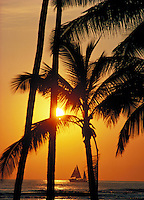 Wakiki sunset with sailboat and palms, Oahu
