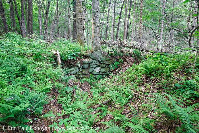 The Gilman Place home site cellar hole along Sandwich Notch Road in Sandwich, New Hampshire. During the early nineteenth century, this homestead was part of a hill farm community (thirty to forty families) that lived in the Notch. By 1860 much of the community was abandoned, and by the turn of the twentieth century only one person lived in the Notch year around.