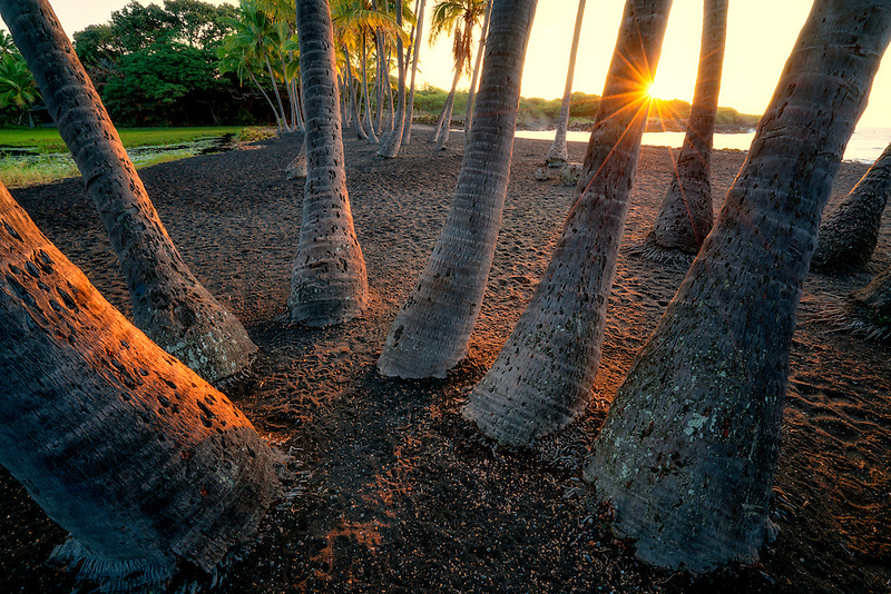 Palm trees and sunrise at  Punaluu Black Sand Beach. Hawaii Island