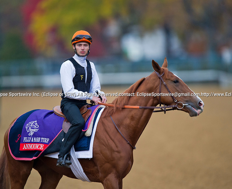 Announce, trained by Andre Fabre and to be ridden by Maxime Guyon, exercises in preparation for the 2011 Breeders' Cup at Churchill Downs on November 3, 2011.