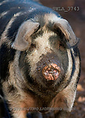 Carl, ANIMALS, photos(SWLA3743,#A#)