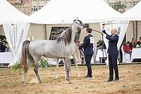 International Arabian Horse Show, line up for the judges are, D Feddah and Fajir Albidayer. Prague Intercup September 2017