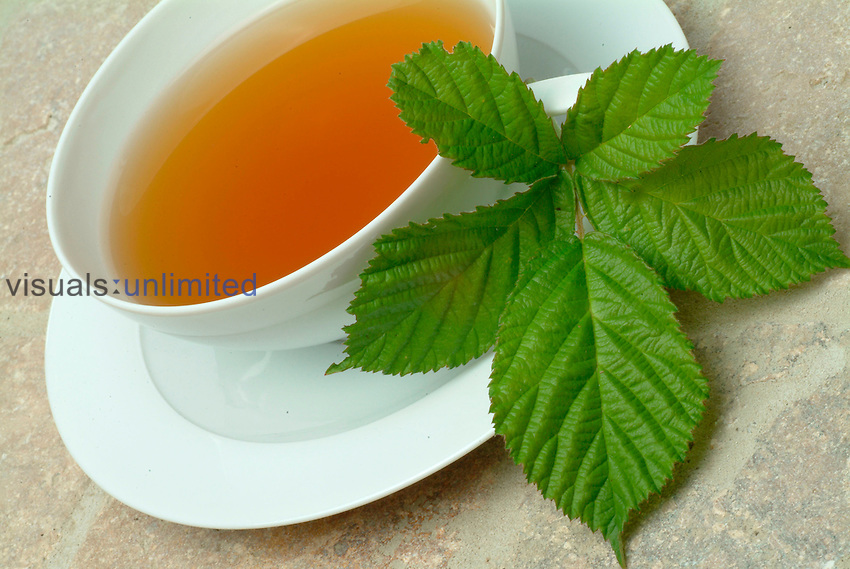 Medicinal tea- herb tea-  leaves and blossoms of the blackberry- used as medicinal plant- herb- Rubus fructicosus