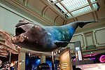 Smithsonian Museum of Natural History, Blue Whale and Ocean Exhibit, Washington, DC, dc124483
