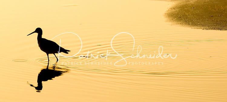A bird is silhouetted in the water in Amelia Island, FL