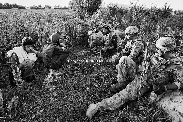 US and Afghan soldiers talk to local farmers as they harvest the opium crop from their poppy fields in Jazah village, in the Arghandab valley, 09 May 2011. (John D McHugh)