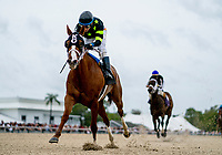 OLDSMAR, FL - MARCH 10: Stormy Embrace #6, ridden by Antonio Gallardo, wins the Manatee Overnight Handicap on Tampa Derby Day at Tampa Bay Downs on March 10, 2018 in Oldsmar, FL. (Photo by Scott Serio/Eclipse Sportswire/Getty Images)