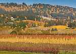 Fall colors in the Willamette Valley create bands of color in the hills