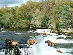 Brown bears fishing at Katmai National Park