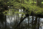 Reflections in Lymington River, Water Corpse Inclosure, near Brockenhurst, New Forest, Hampshire, UK