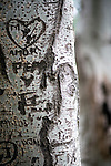 Carvings on a tree bark, Seville, Spain