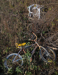 A bicycle and air conditioner are two of the junk items found as volunteers clear honeysuckle and other invasive plants from Otterbein Lake in Westerville, Ohio, on a cold winter morning. The once abandoned lake was used as a holding pond for industry.  Photo Copyright Gary Gardiner. Not for reproduction without written permission.