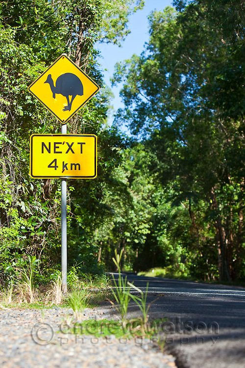 Cassowary crossing sign.  The cassowary is an endangered species of flightless bird, native to the rainforests of north Queensland.  Daintree National Park, Queensland, Australia