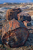 Petrified logs in Jaspar Forest<br />