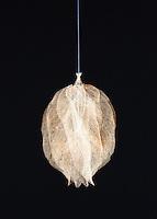 Leaf skeleton on white  background.  Fine art image.