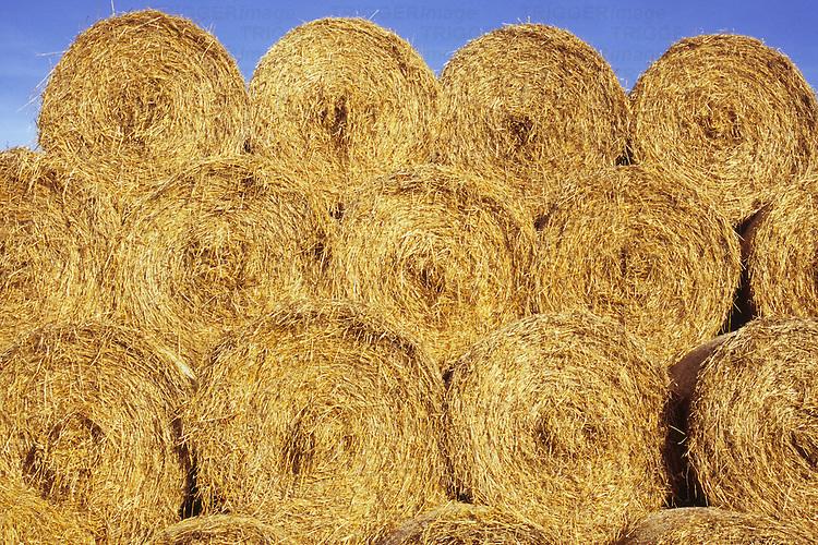 Circular bales of farmyard straw stacked under clear blue sky