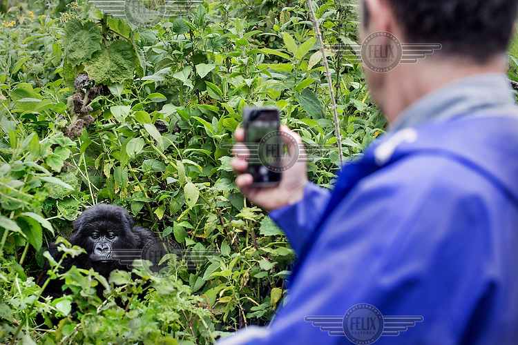 A tourist photographs a gorilla in Volcanoes National Park, previously known as Ruhengeri.