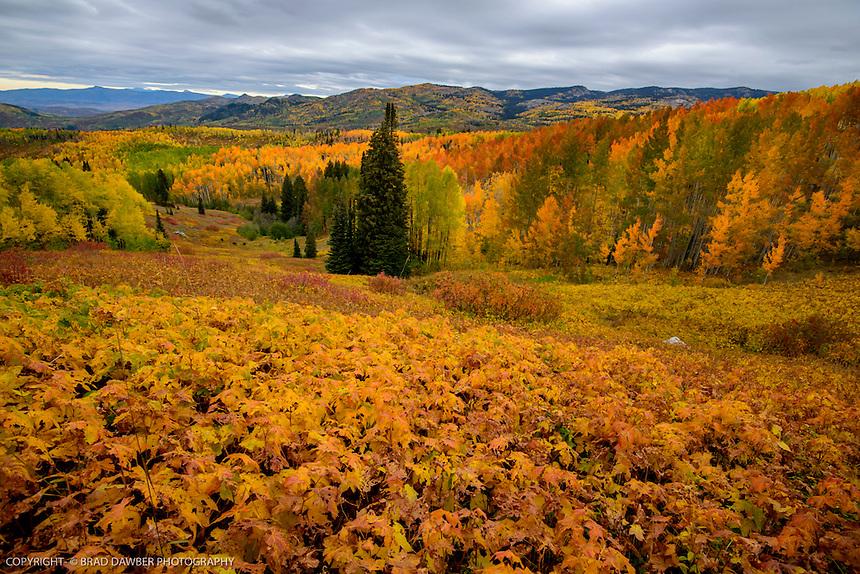 PHENOMENAL 2016 FALL- ROUTT COUNTY- BUFFALO PASS- STEAMBOAT SPRINGS, COLORADO
