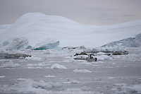 Small Inuit fishing boat picking way carefully through drift ice. Icefjord world heritage site  from  Jakobshavn Glacier, Ilulissat, Disco Bay, Greenland