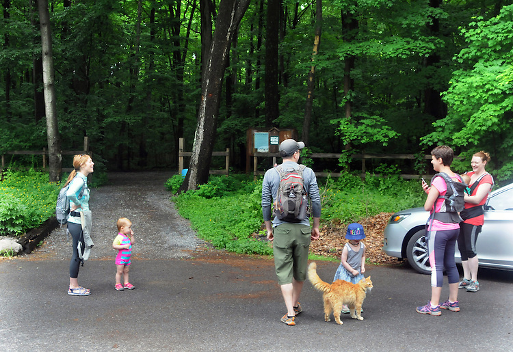 A Neighborhood Cat acts as a welcoming committee for the hikrs at the Sterley Ave entrance for the start of a Hike It Baby/ Catskills-Woodstock sponsored hike into the Esopus Bend Nature Preserve in Saugerties, NY, on Memorial Day Monday, May 30, 2016. Photo by Jim Peppler. Copyright Jim Peppler 2016.  The hike was led by HIB.Catsjill-Woodstock, Ambassador, Ann Peters, accompanied by her husband, John Peters, their daughter, iolet; HIB chapter co-Ambassador, Ali Troxell, with her daughter, Lucia; and Robin Willens, and her son, Landon. They entered at the Sterley Avenue entrance and walked thru to the landing area on the Esopus.