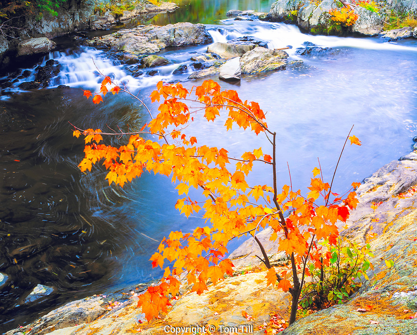 Big Falls, Missisquoi River, Vermont   Sugar maple  on rocky bank  Green Mountains