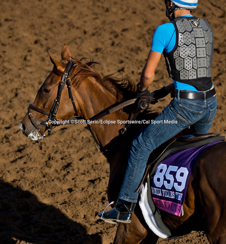 October 28, 2014:  Partisan Politics, trained by Chad Brown, exercises in preparation for the Breeders' Cup Juvenile Fillies Turf at Santa Anita Race Course in Arcadia, California on October 28, 2014. Scott Serio/ESW/CSM
