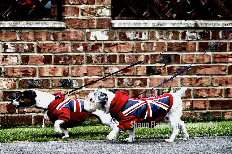 Pix: Shaun Flannery/shaunflanneryphotography.com...COPYRIGHT PICTURE>>SHAUN FLANNERY>01302-570814>>07778315553>>..19th June 2012..The Olympic Torch Relay passes along Leeds Road, Selby in North Yorkshire..Two dog's dressed in Union Jack 'clothing' out to support the Olympic Torch Relay.