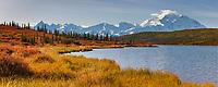 Autumn tundra along the shore of Wonder Lake, mt Denali (Denali) of the Alaska Range mountains, Denali National Park, Interior, Alaska.