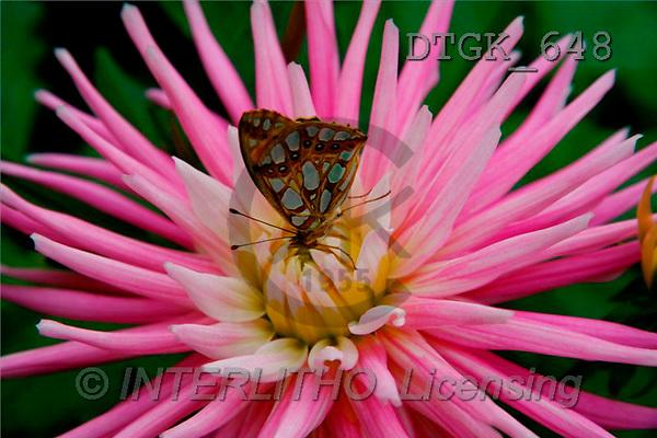 Gisela, FLOWERS, photos(DTGK648,#F#) Blumen, flores, retrato