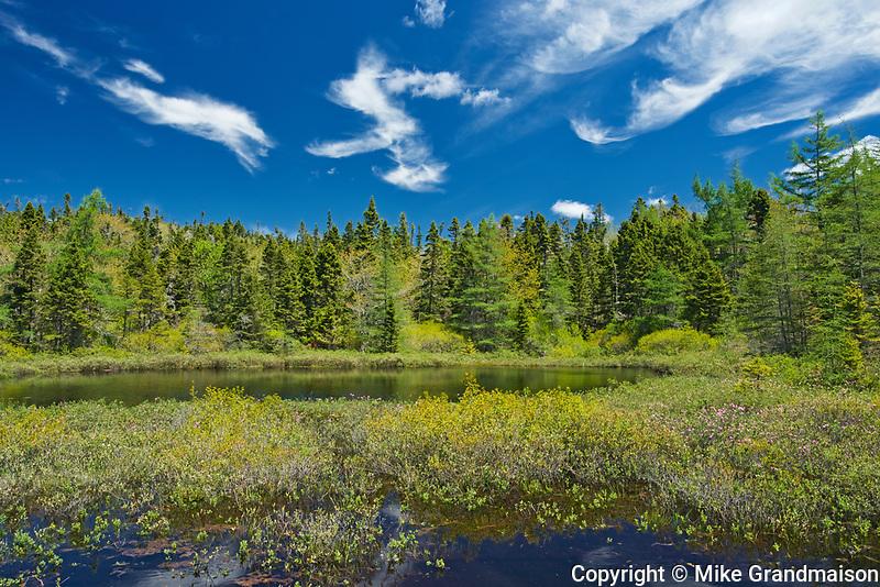 Wetland , East Dover, Nova Scotia, Canada