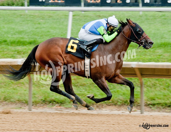 Ageless winning at Delaware Park on 7/25/13