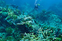 Scuba diver and turtle at Little St James.<br /> US Virgin Islands