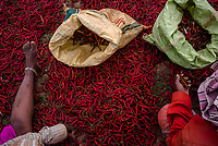 Women sort chillies as its sits to dry in village Gorikothapally, Telangana, Indiia, on Friday, February 8, 2019. Photographer: Suzanne Lee for Safe Water Network