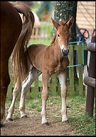 Newborn foal gives hope to rare breed.