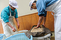 Transferring the sugar pulp and wrapping it in cloth, Baikodo Inc, Hiketa, Kagawa Pref, Japan, February 2, 2012. Wasanbon is a special kind of hand-made Japanese sugar often used for traditional sweets. It is finer, more fragrant and more expensive than normal sugar. It is a specialty of Kagawa Prefecture on the island of Shikoku. Baikodo has been making Wasanbon for over 50 years.