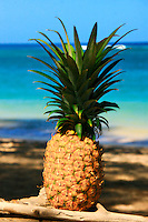 A Maui Pineapple at the beach in Hawaii.