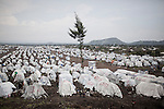 Mugunga refugee camp, Goma, sept 2013