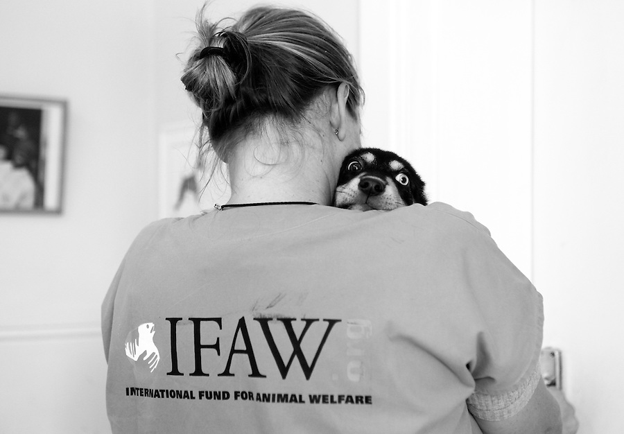 Veterinarian, Saskia Karius, carries a severely wounded puppy at IFAW's CLAW clinic on the grounds of the Durban Deep mine close to Soweto in South Africa. This program provides veterinary services to cats and dogs in some of the poorest shantytowns outside of Johannesburg, South Africa. 2/21/12 Julia Cumes/IFAW