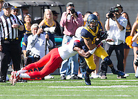Saturday, November 2nd, 2013: California's Chris Harper gets his 100th career reception during a game against Arizona at Memorial Stadium, Berkeley, Final Score: Arizona defeated California 33-28