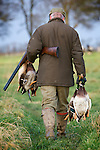 Pix: Shaun Flannery/shaunflanneryphotography.com..COPYRIGHT PICTURE>>SHAUN FLANNERY>01302-570814>>07778315553>>..19th December 2008...............Game shoot,  South Yorkshire..A gun retrieves duck after a drive.