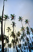Palm trees with blue sky and clouds