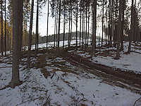 FOREST_LOCATION_90044