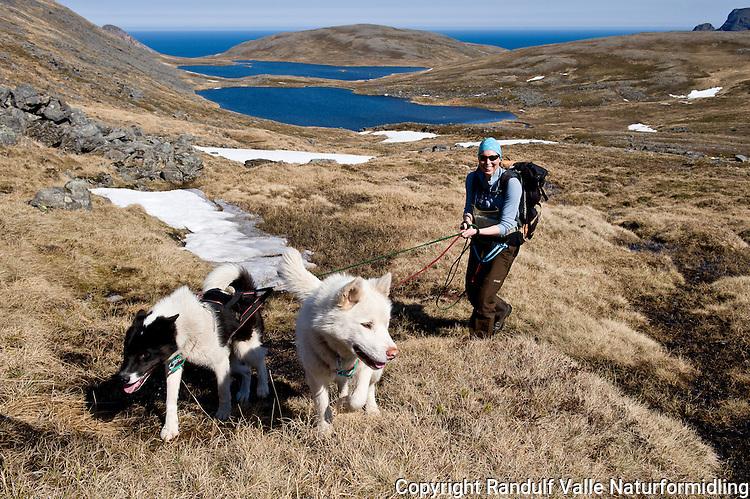 Dame med hunder foran Knivskjelvatna på Magerøya. Nordkapp i bakgrunnen til høyre. ---- Woman and dogs in front of  Knivskjelvatna lakes on Magerøya. North Cape in the background to the right.