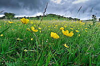 Grass meadow, Whitewell, Clitheroe, Lancashire