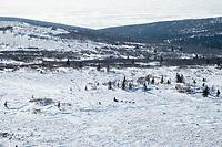 Paul Gebhardt runs on top of the Blueberry Hills on his way to Shaktoolik during Iditarod 2009