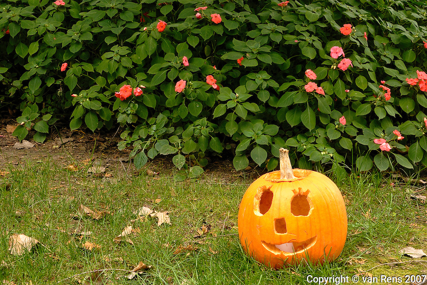 Range of emotions expressed in the pumpkin garden series